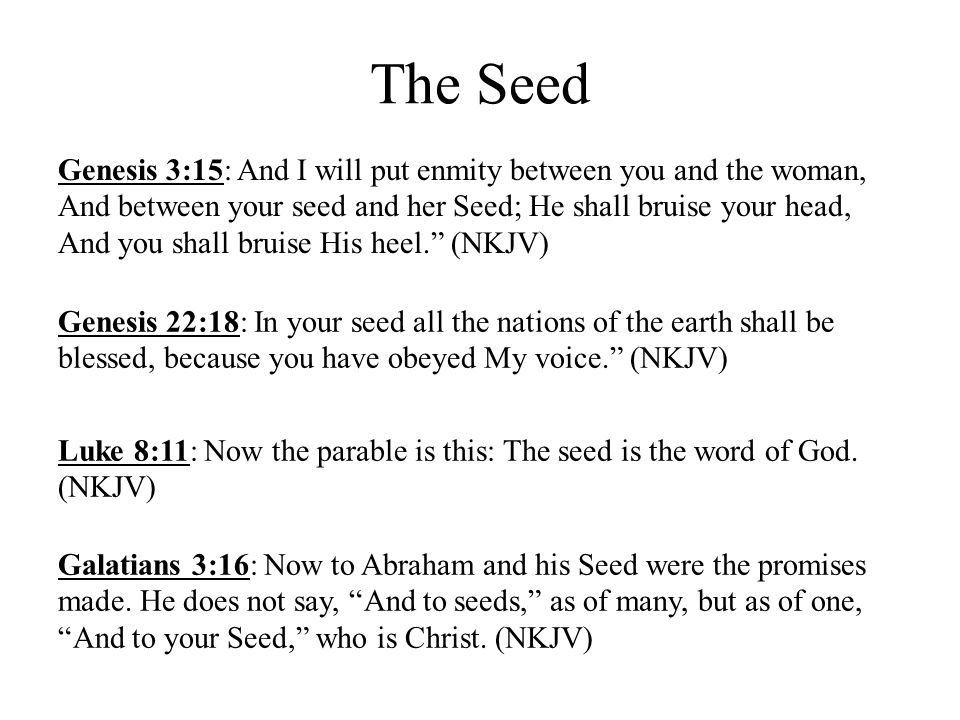 The Seed Genesis 3:15: And I will put enmity between you and the woman, And between your seed and her Seed; He shall bruise your head, And you shall b