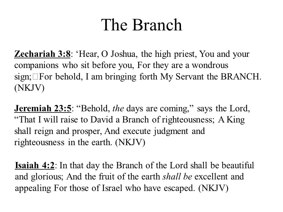 The Branch Zechariah 3:8: 'Hear, O Joshua, the high priest, You and your companions who sit before you, For they are a wondrous sign; For behold, I am