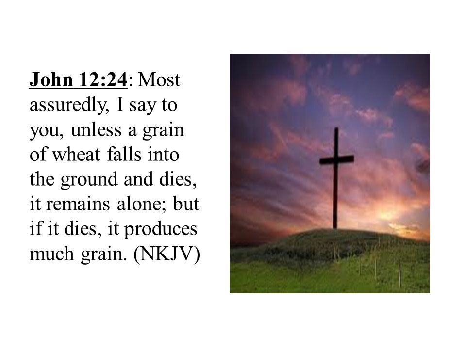John 12:24: Most assuredly, I say to you, unless a grain of wheat falls into the ground and dies, it remains alone; but if it dies, it produces much g