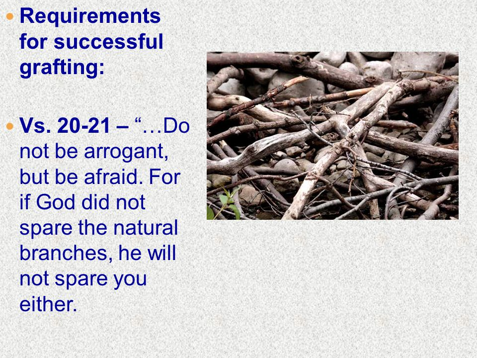Requirements for successful grafting: Vs. 20-21 – …Do not be arrogant, but be afraid.