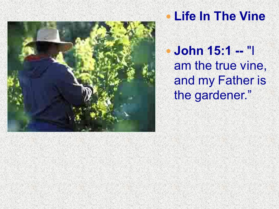 Life In The Vine John 15:1 -- I am the true vine, and my Father is the gardener.