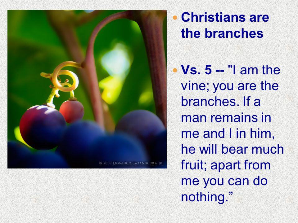 Christians are the branches Vs. 5 -- I am the vine; you are the branches.