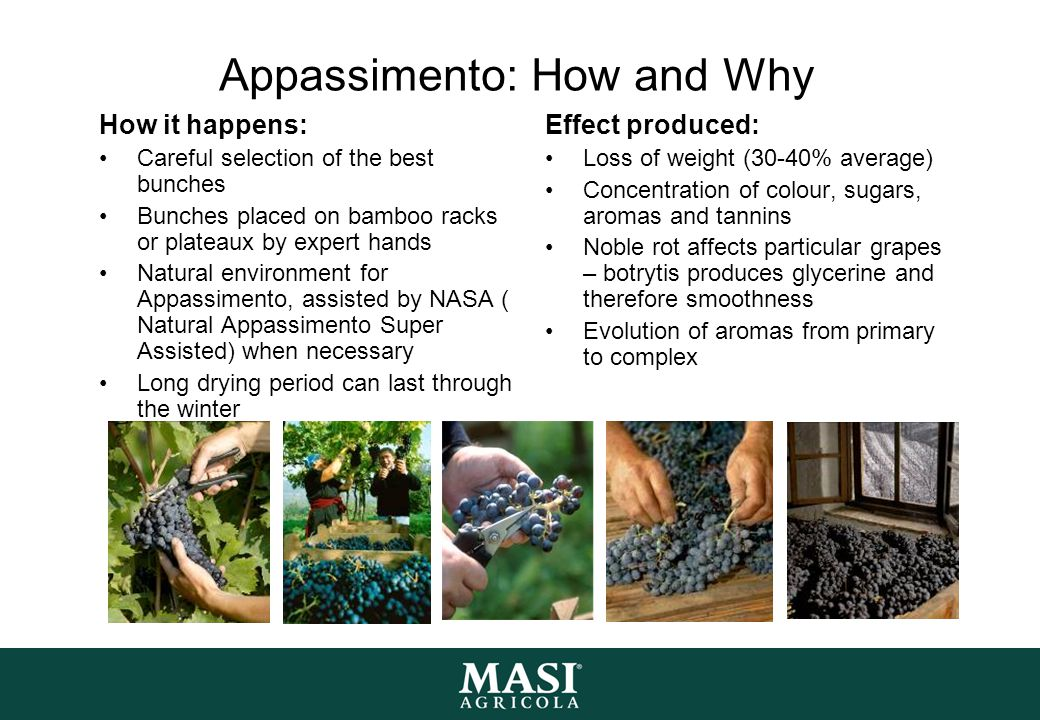 Appassimento: How and Why How it happens: Careful selection of the best bunches Bunches placed on bamboo racks or plateaux by expert hands Natural env