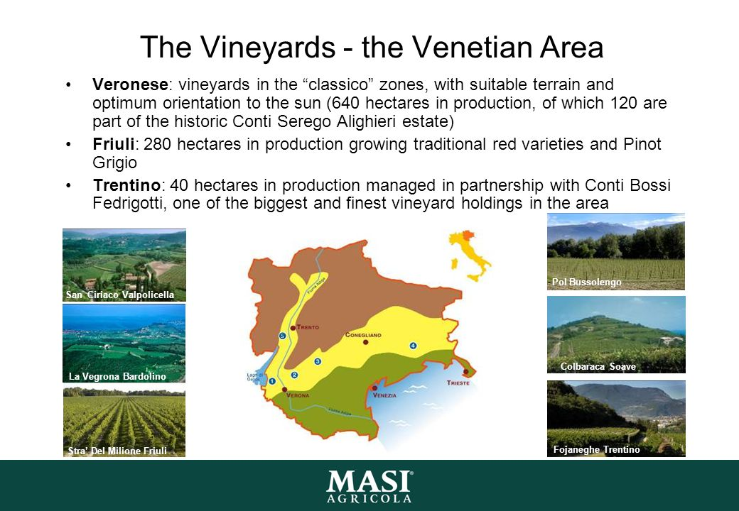 The Vineyards - the Venetian Area Veronese: vineyards in the classico zones, with suitable terrain and optimum orientation to the sun (640 hectares in production, of which 120 are part of the historic Conti Serego Alighieri estate) Friuli: 280 hectares in production growing traditional red varieties and Pinot Grigio Trentino: 40 hectares in production managed in partnership with Conti Bossi Fedrigotti, one of the biggest and finest vineyard holdings in the area Pol Bussolengo Colbaraca Soave Fojaneghe Trentino San Ciriaco Valpolicella Stra' Del Milione Friuli La Vegrona Bardolino