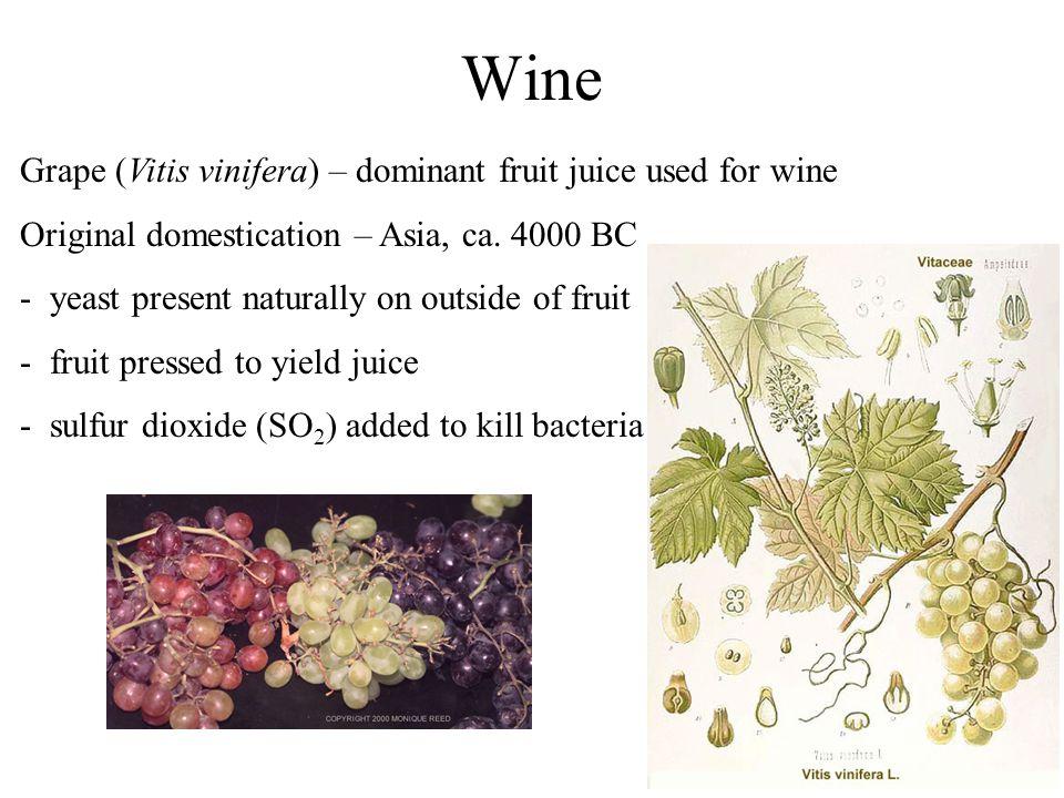 Wine Grape (Vitis vinifera) – dominant fruit juice used for wine Original domestication – Asia, ca.