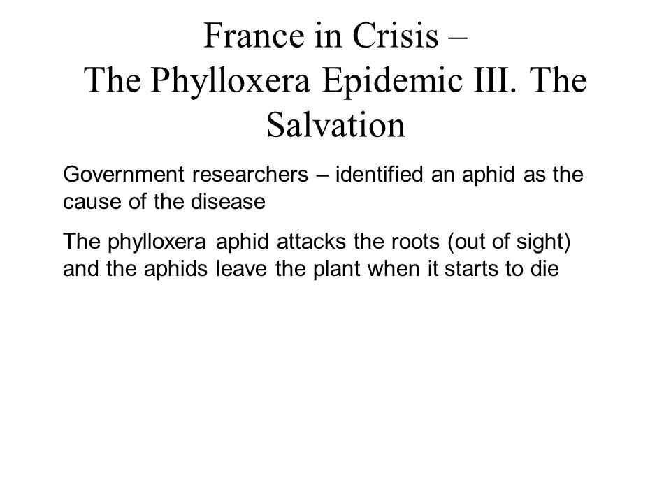 France in Crisis – The Phylloxera Epidemic III.