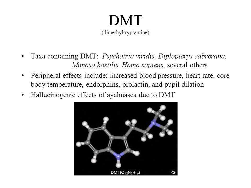 DMT (dimethyltryptamine) Taxa containing DMT: Psychotria viridis, Diplopterys cabrerana, Mimosa hostilis, Homo sapiens, several others Peripheral effects include: increased blood pressure, heart rate, core body temperature, endorphins, prolactin, and pupil dilation Hallucinogenic effects of ayahuasca due to DMT