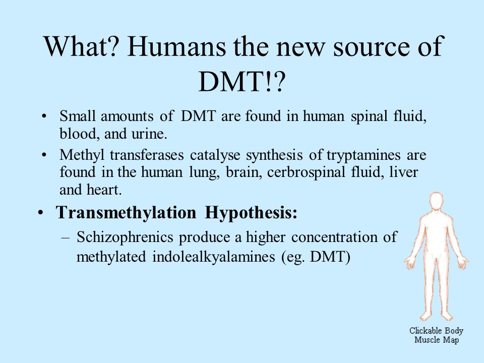What. Humans the new source of DMT!.