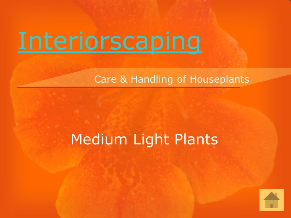 Medium Light Plants Care & Handling of Houseplants Interiorscaping