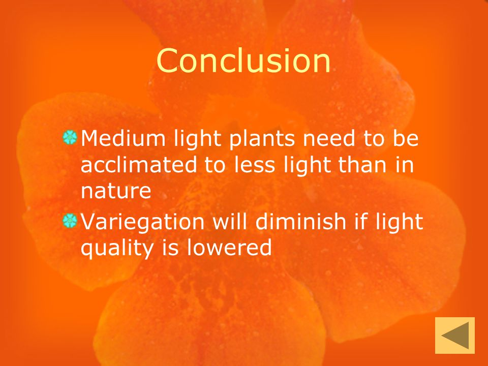 Conclusion Medium light plants need to be acclimated to less light than in nature Variegation will diminish if light quality is lowered