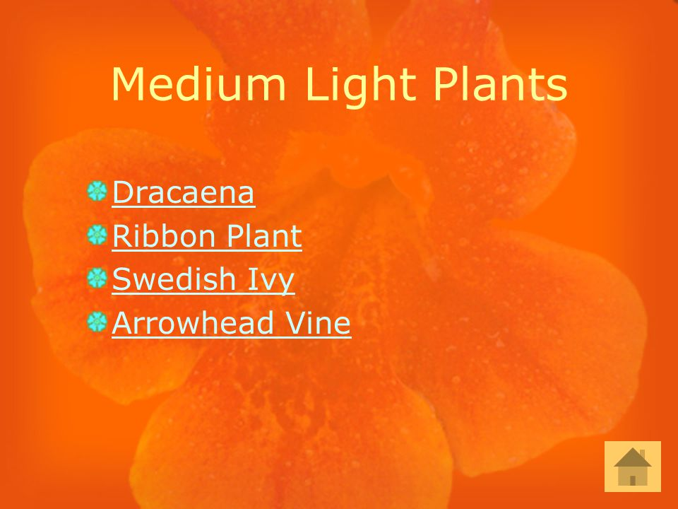 Medium Light Plants Dracaena Ribbon Plant Swedish Ivy Arrowhead Vine