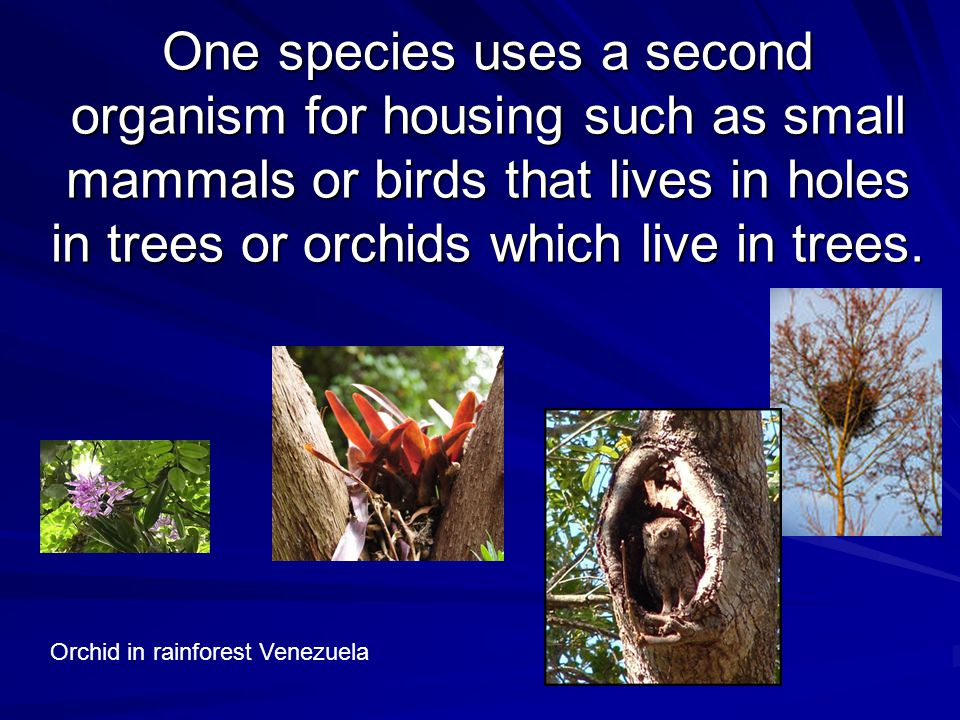 Parasitism One organism, usually physically smaller of the two (the parasite) benefits and the other (the host) is harmed Parasitism involves one organism living on or inside another organism and harming it.