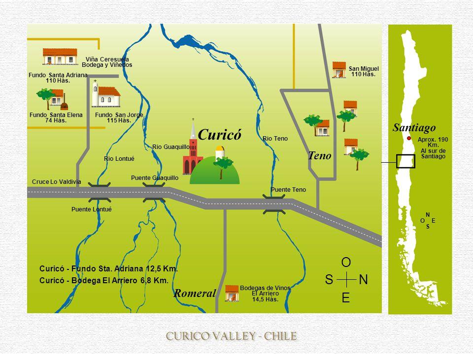 Curicó Viña Ceresuela Bodega y Viñedos Fundo Santa Adriana 110 Hás.