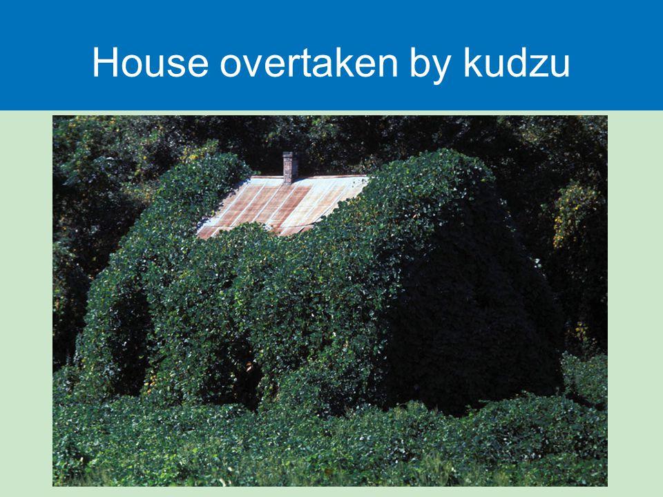 House overtaken by kudzu