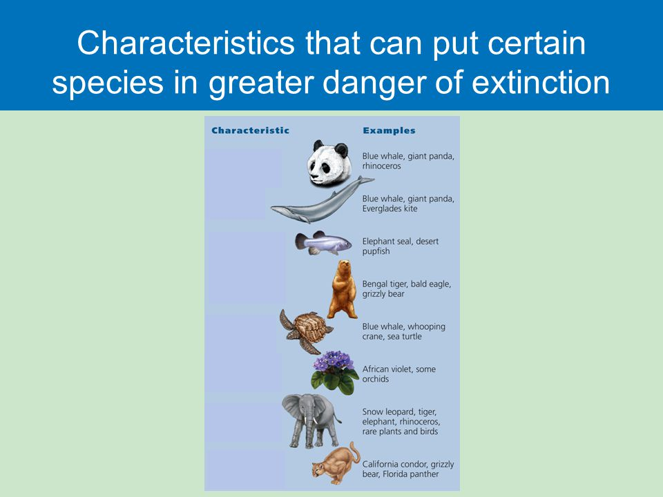 Characteristics that can put certain species in greater danger of extinction