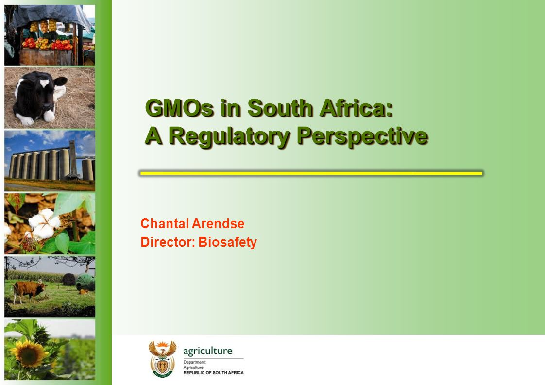 GMOs in South Africa: A Regulatory Perspective Chantal Arendse Director: Biosafety