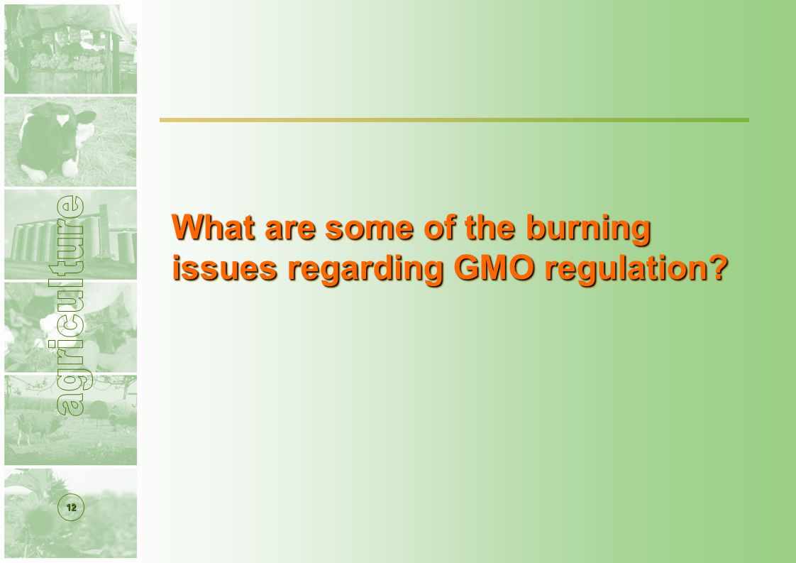 12 What are some of the burning issues regarding GMO regulation