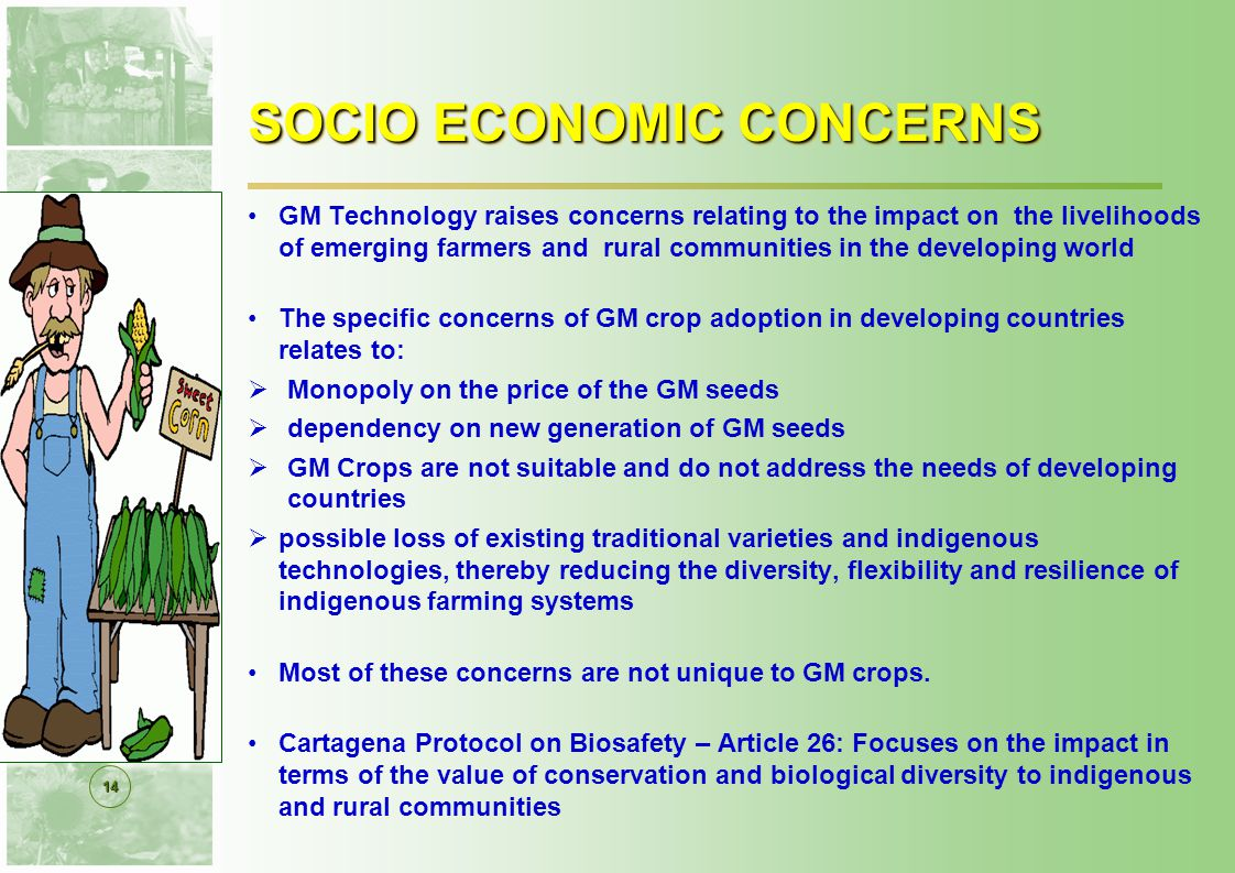 14 SOCIO ECONOMIC CONCERNS GM Technology raises concerns relating to the impact on the livelihoods of emerging farmers and rural communities in the developing world The specific concerns of GM crop adoption in developing countries relates to:  Monopoly on the price of the GM seeds  dependency on new generation of GM seeds  GM Crops are not suitable and do not address the needs of developing countries  possible loss of existing traditional varieties and indigenous technologies, thereby reducing the diversity, flexibility and resilience of indigenous farming systems Most of these concerns are not unique to GM crops.
