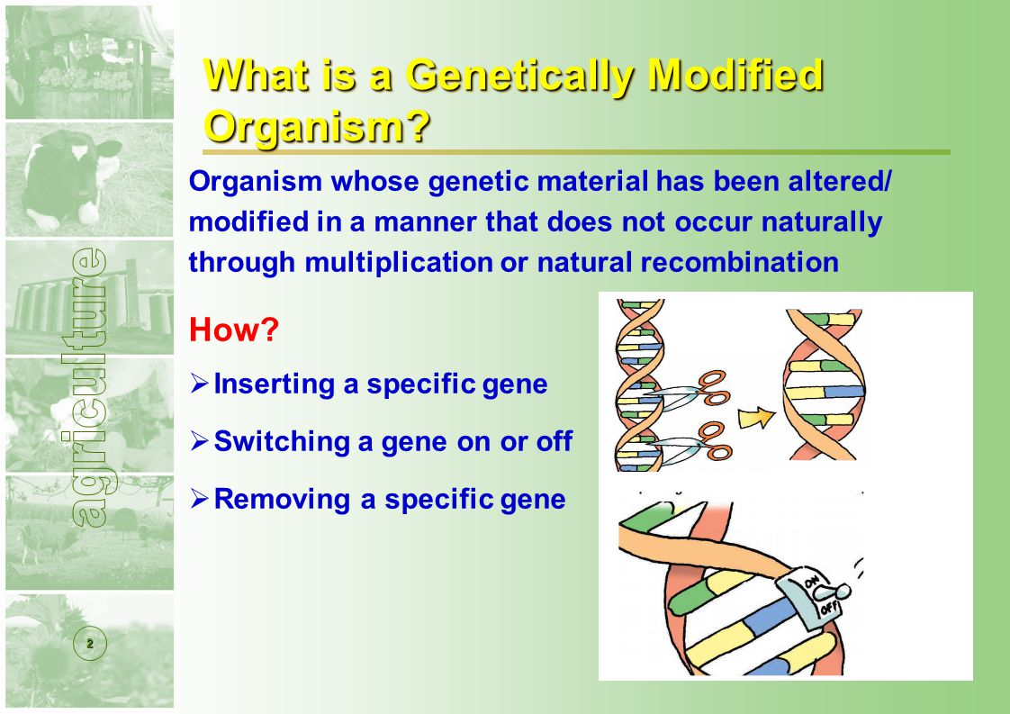 2 What is a Genetically Modified Organism.