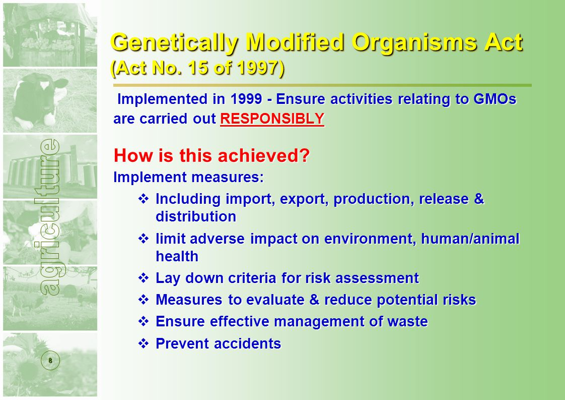 19 GMOs Approved for Commercial use Type of approval: General release – conditional Use of the event: Importation/exportation; commercial planting; food and/or feed CompanyCropTraitYear approved Monsanto Cotton Insect R Herb T 2005, 2007 Herb T 2000, 2007 Insect R 1997, 2003 Maize Insect R Herb T 2007 Herbicide tolerant 2002 Insect resistant1997 Soybean Herbicide tolerant 2001 SyngentaMaizeInsect resistant2003