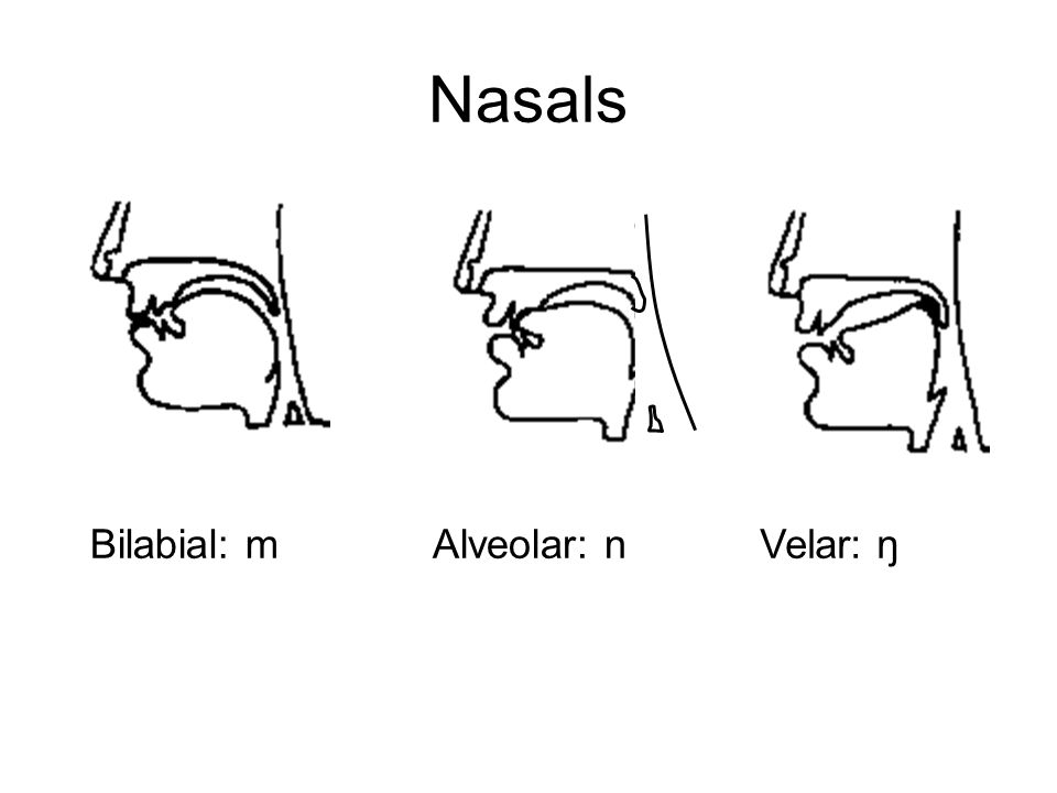 Nasals Bilabial: mVelar: ŋ Alveolar: n