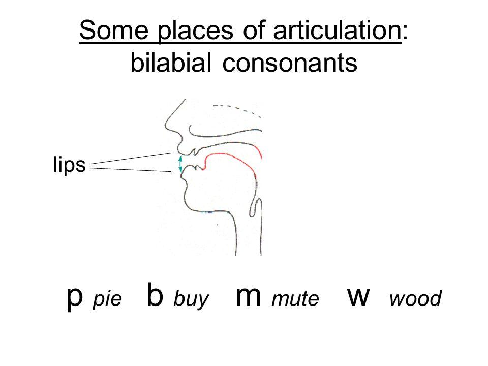 Labiodental consonants f fine v vine upper teeth lower lip