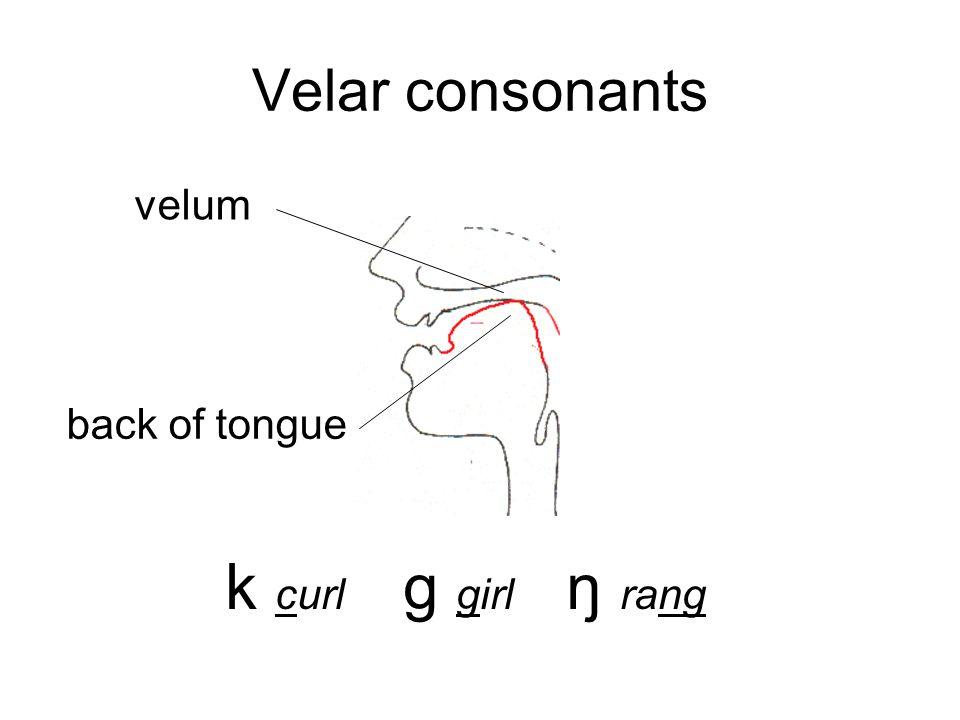 Some manners of articulation: plosives (think explosion) or stops Bilabial: p bAlveolar: t dVelar: k g