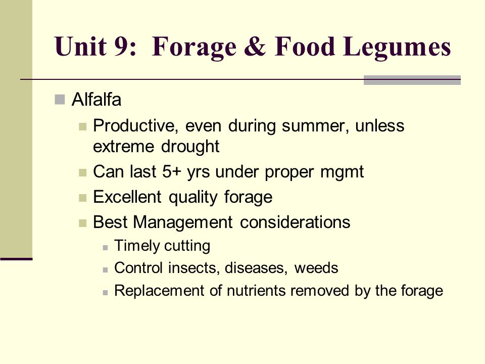 Unit 9: Forage & Food Legumes Alfalfa Productive, even during summer, unless extreme drought Can last 5+ yrs under proper mgmt Excellent quality forage Best Management considerations Timely cutting Control insects, diseases, weeds Replacement of nutrients removed by the forage