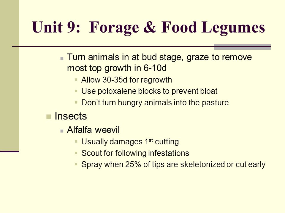 Unit 9: Forage & Food Legumes Turn animals in at bud stage, graze to remove most top growth in 6-10d  Allow 30-35d for regrowth  Use poloxalene blocks to prevent bloat  Don't turn hungry animals into the pasture Insects Alfalfa weevil  Usually damages 1 st cutting  Scout for following infestations  Spray when 25% of tips are skeletonized or cut early