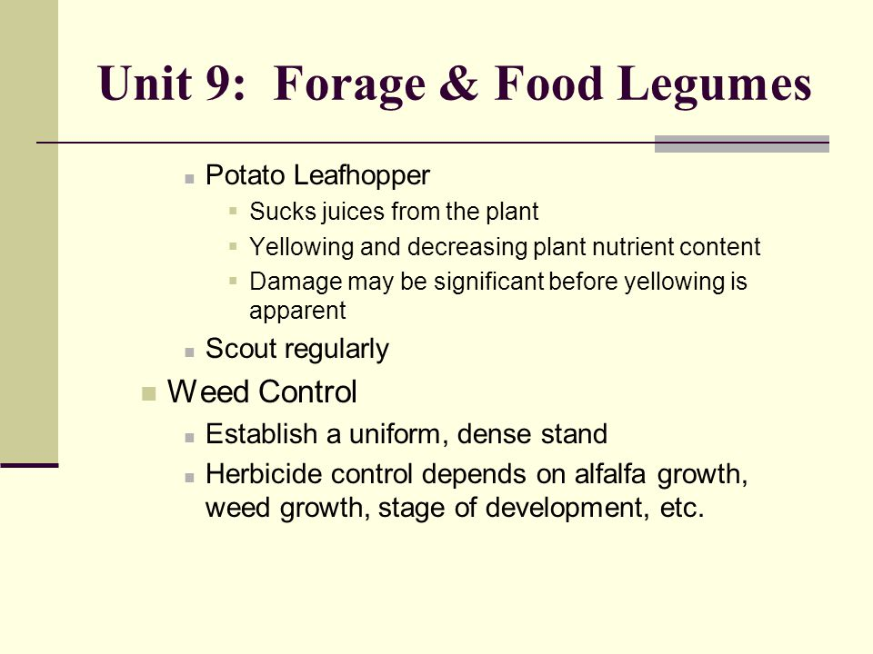 Unit 9: Forage & Food Legumes Potato Leafhopper  Sucks juices from the plant  Yellowing and decreasing plant nutrient content  Damage may be significant before yellowing is apparent Scout regularly Weed Control Establish a uniform, dense stand Herbicide control depends on alfalfa growth, weed growth, stage of development, etc.