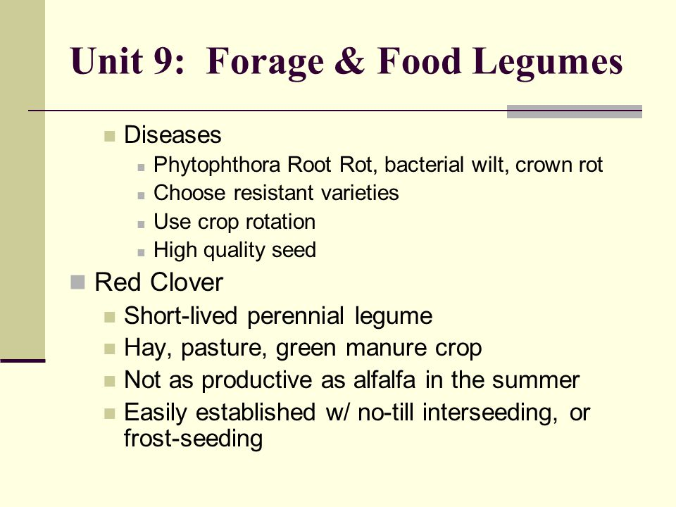 Unit 9: Forage & Food Legumes Diseases Phytophthora Root Rot, bacterial wilt, crown rot Choose resistant varieties Use crop rotation High quality seed Red Clover Short-lived perennial legume Hay, pasture, green manure crop Not as productive as alfalfa in the summer Easily established w/ no-till interseeding, or frost-seeding