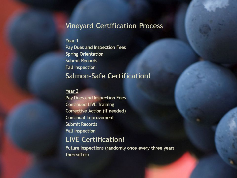 Vineyard Certification Process Year 1 Pay Dues and Inspection Fees Spring Orientation Submit Records Fall Inspection Salmon-Safe Certification.
