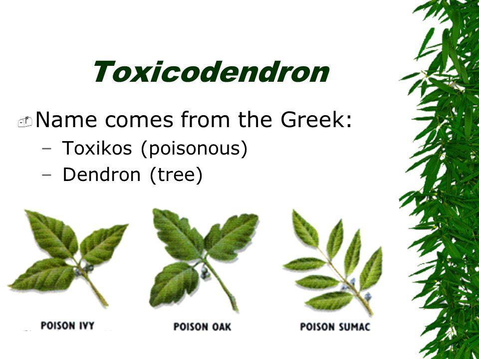Toxicodendron  Name comes from the Greek: – Toxikos (poisonous) – Dendron (tree)