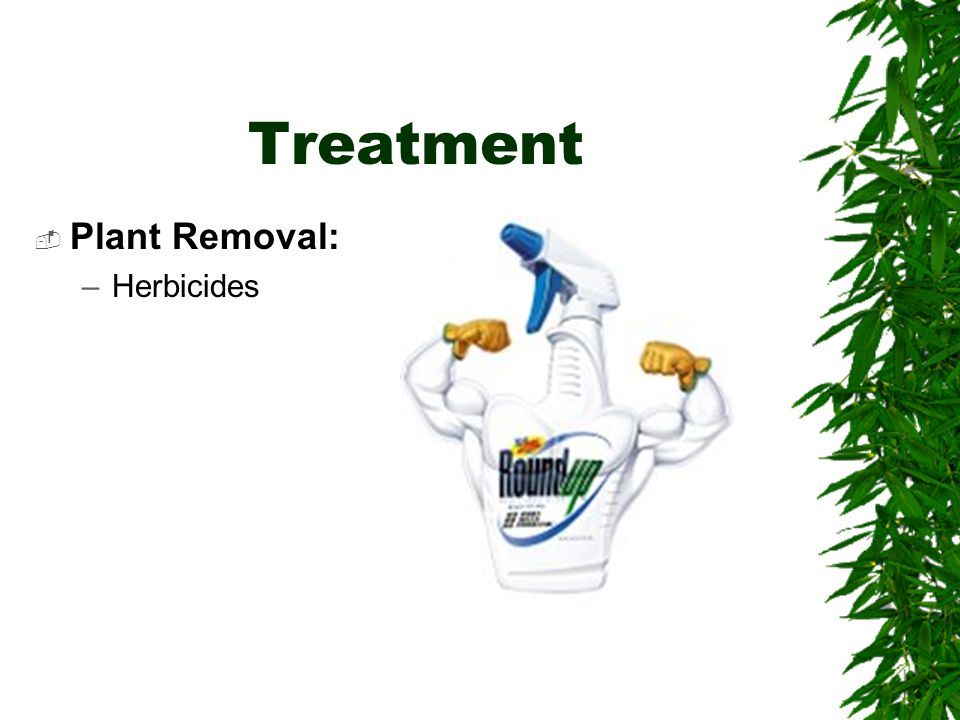 Treatment  Plant Removal: –Herbicides