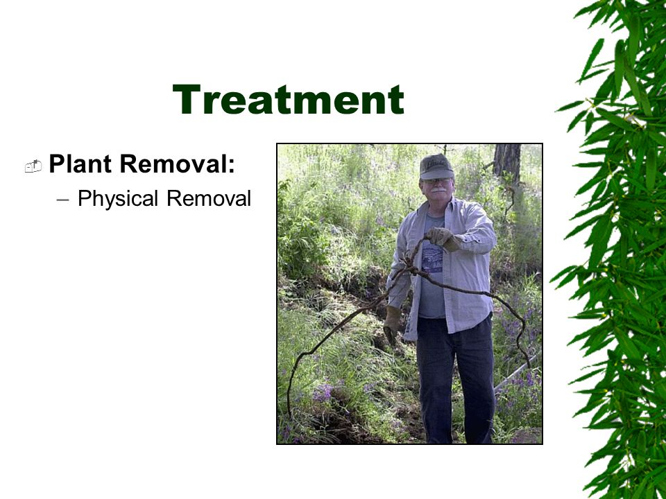 Treatment  Plant Removal: –Physical Removal