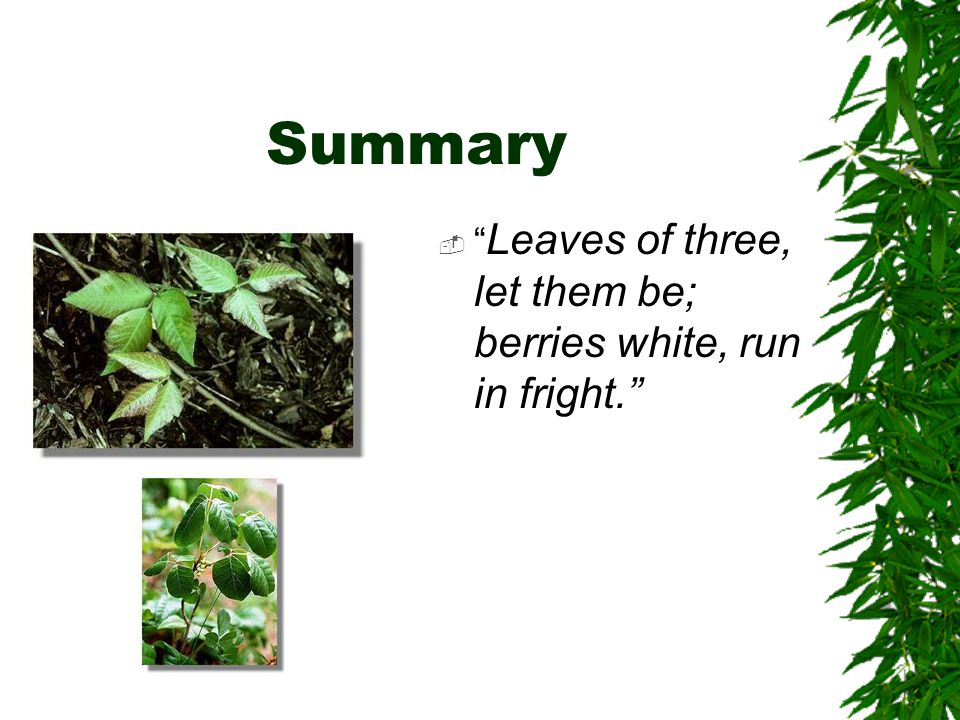 "Summary  "" Leaves of three, let them be; berries white, run in fright."""