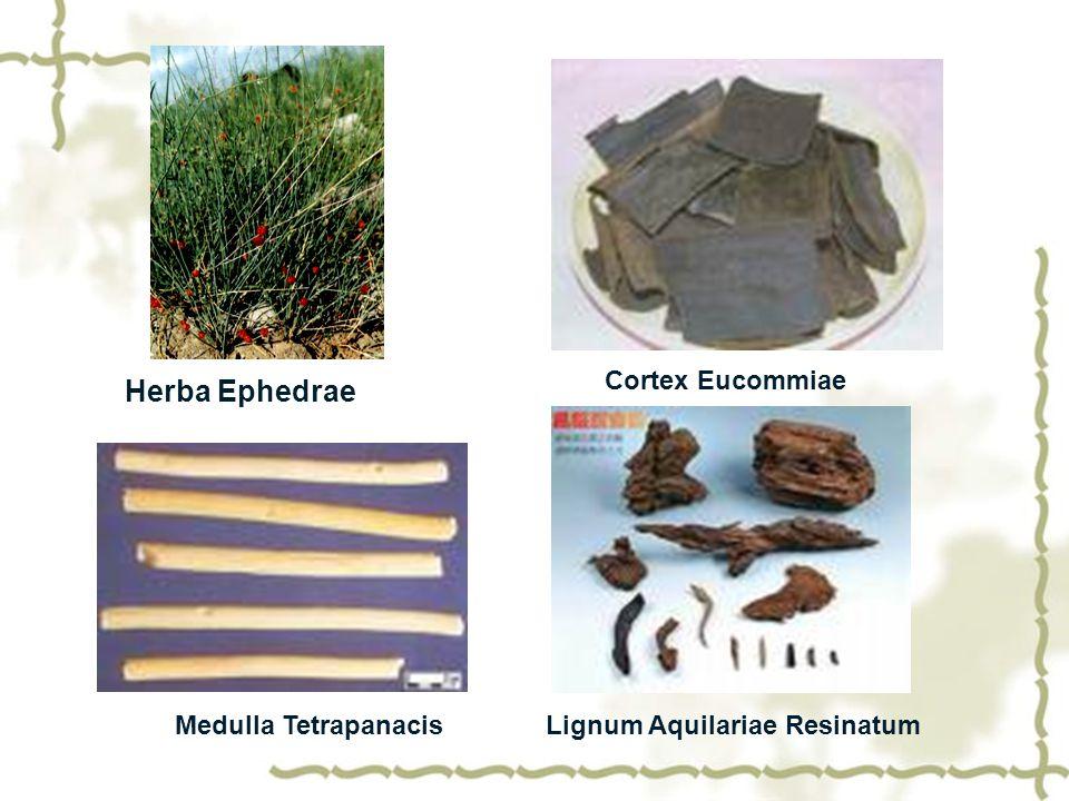 Herba Ephedrae Cortex Eucommiae Medulla TetrapanacisLignum Aquilariae Resinatum