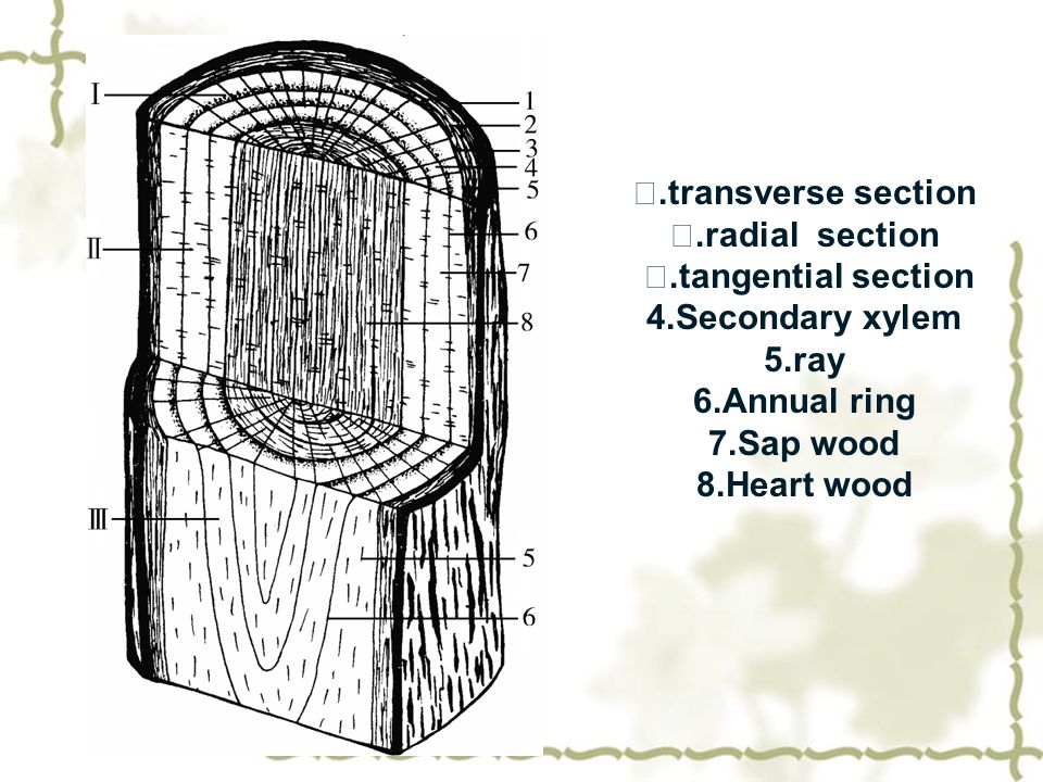Ⅰ.transverse section Ⅱ.radial section Ⅲ.tangential section 4.Secondary xylem 5.ray 6.Annual ring 7.Sap wood 8.Heart wood