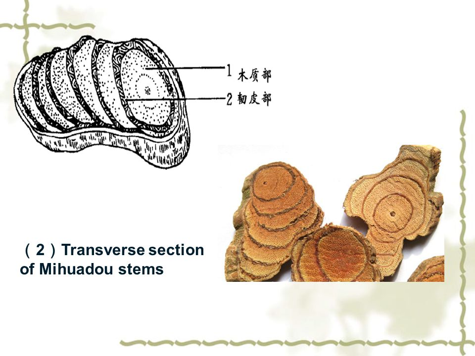 ( 2 ) Transverse section of Mihuadou stems