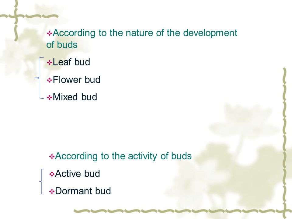  According to the nature of the development of buds  Leaf bud  Flower bud  Mixed bud  According to the activity of buds  Active bud  Dormant bud