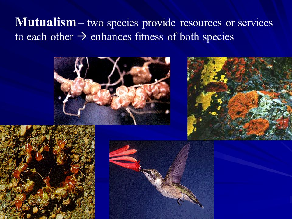 Mutualism – two species provide resources or services to each other  enhances fitness of both species