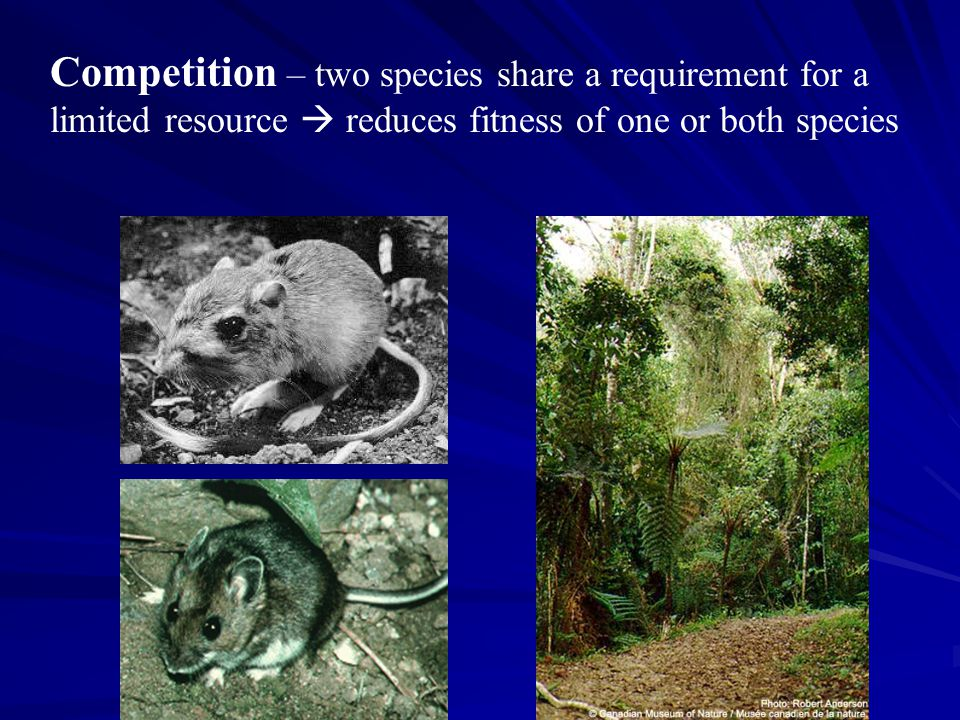 Competition – two species share a requirement for a limited resource  reduces fitness of one or both species