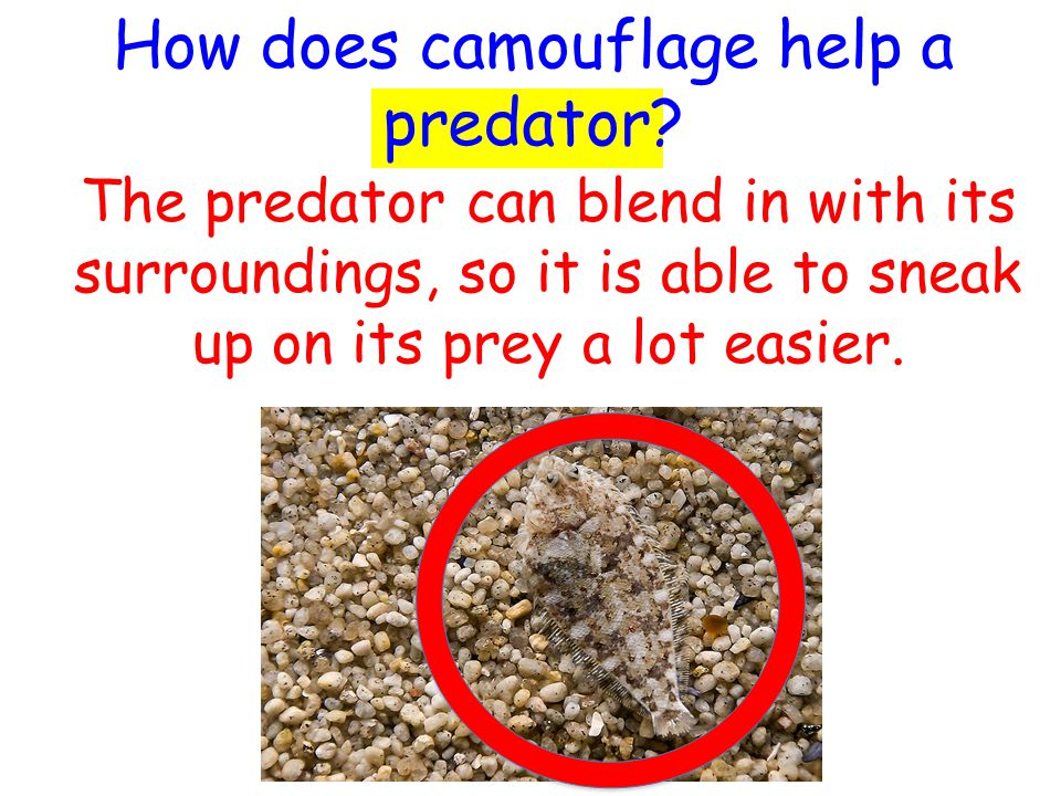 How can color help prey avoid becoming dinner.