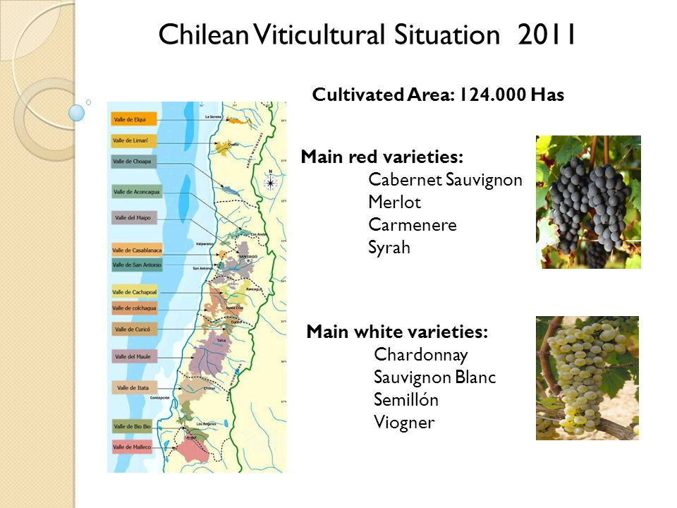 Chilean Viticultural Situation 2011 Cultivated Area: 124.000 Has Main white varieties: Chardonnay Sauvignon Blanc Semillón Viogner Main red varieties: Cabernet Sauvignon Merlot Carmenere Syrah