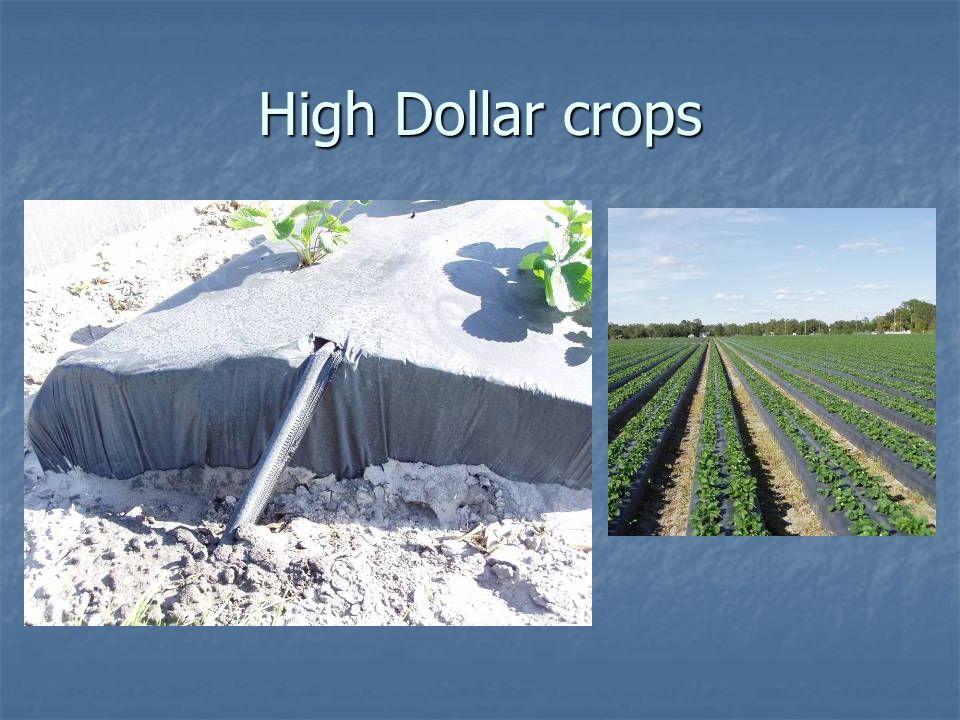 High Dollar crops