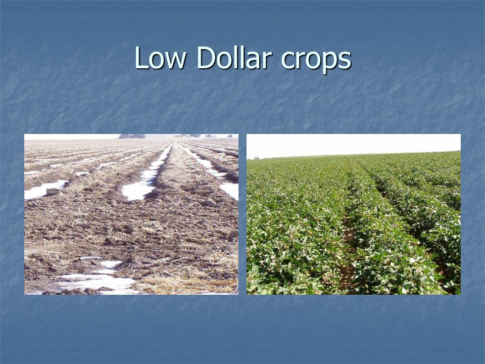 Low Dollar crops