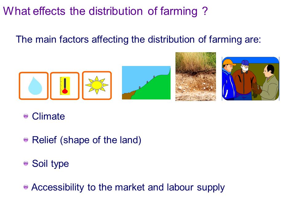 Climate Relief (shape of the land) Soil type Accessibility to the market and labour supply The main factors affecting the distribution of farming are: What effects the distribution of farming ?