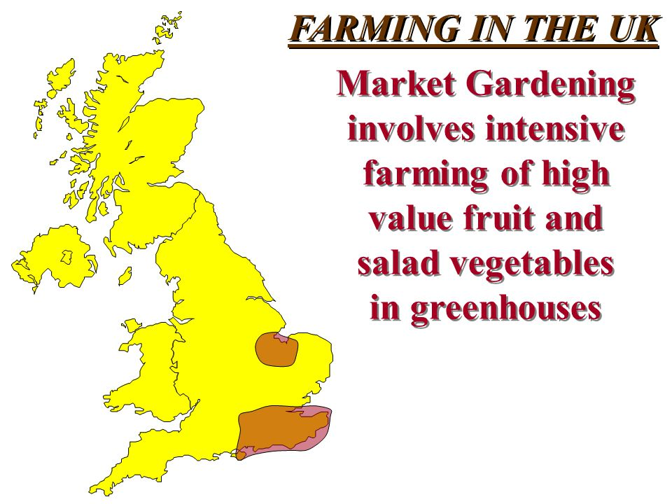 FARMING IN THE UK Market Gardening involves intensive farming of high value fruit and salad vegetables in greenhouses Market Gardening involves intensive farming of high value fruit and salad vegetables in greenhouses