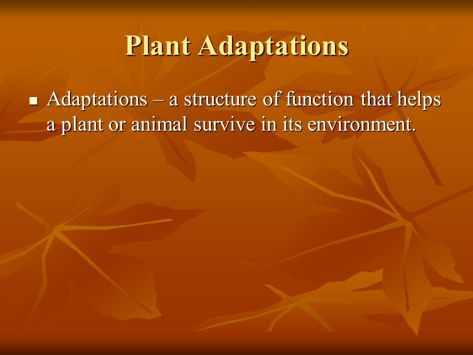 Plant Adaptations Adaptations – a structure of function that helps a plant or animal survive in its environment. Adaptations – a structure of function
