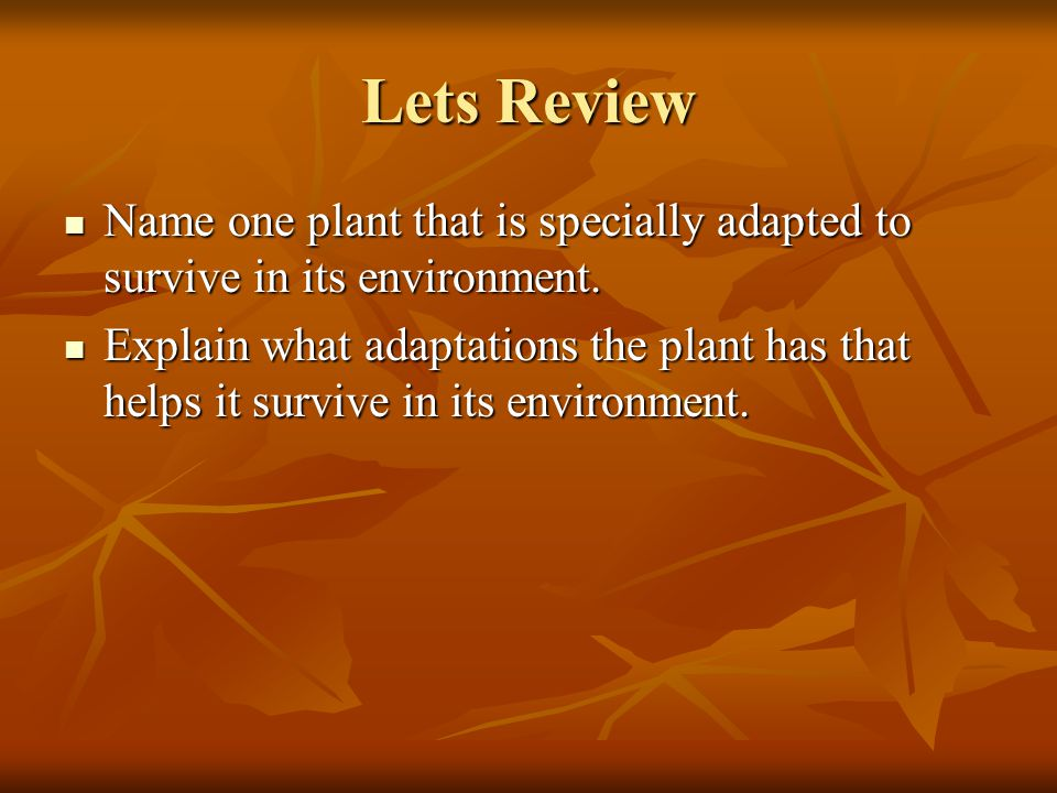 Lets Review Name one plant that is specially adapted to survive in its environment.